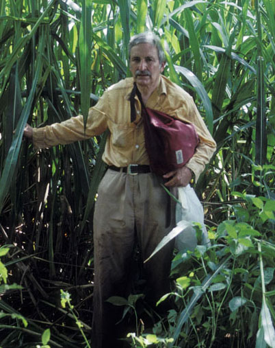 Hugh Iltis collecting Zea nicaraguensis, a wild species of corn, in Nicaragua in 1991. Photo by Bruce Benz.