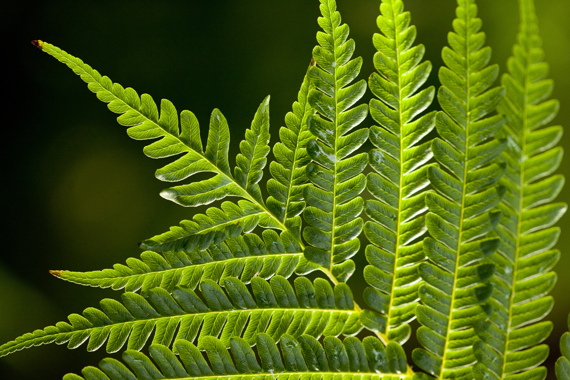 fern Archives - Plant Talk