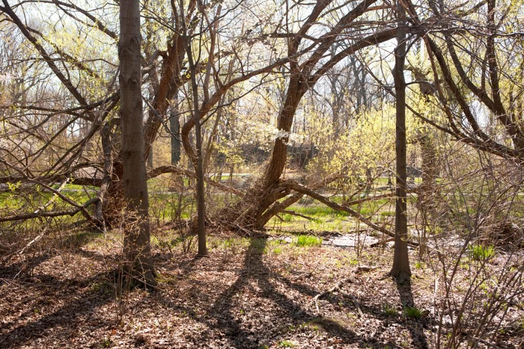 Mitsubishi Wild Wetland Trail