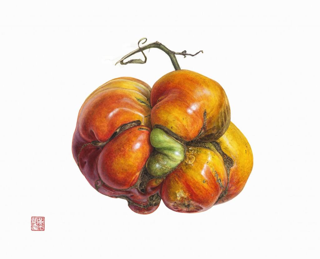 heirloom tomato Solanum lycopersicum Watercolor on paper Asuka Hishiki