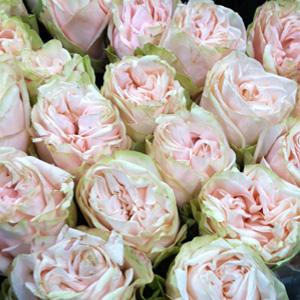The New York Flower Market