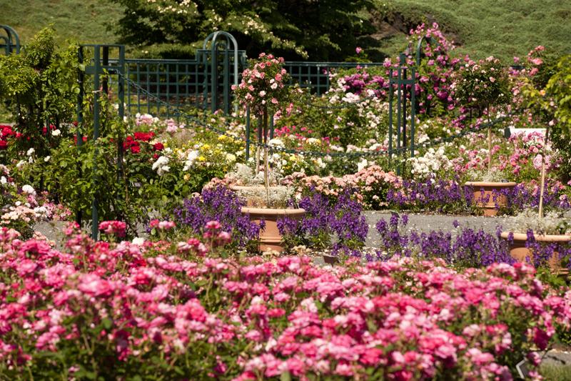 Rockefeller Gardens Garden Ftempo