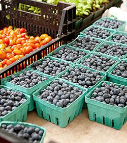 NYBG Greenmarket blueberries
