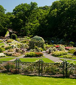 Peggy Rockefeller Rose Garden