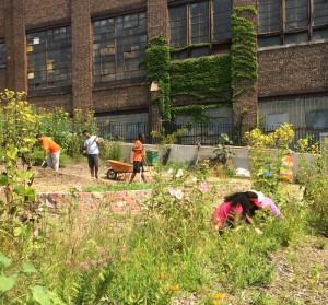 New Roots Community Garden