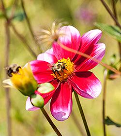 bee pollinator home gardening center flower