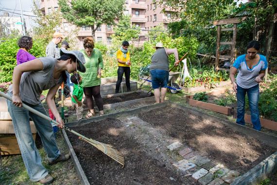 Bronx Green Up Taqwa Community Garden Highbridge Bronx Tamara Bogolasky
