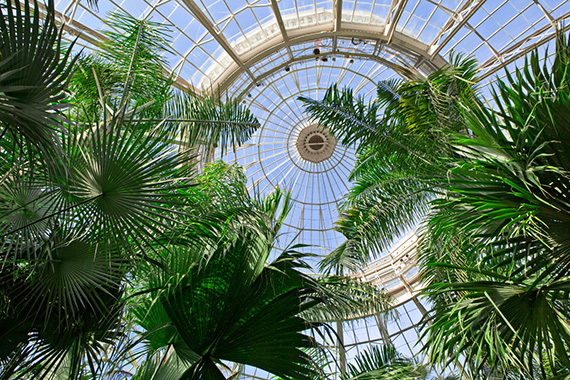 Palm Dome NYBG
