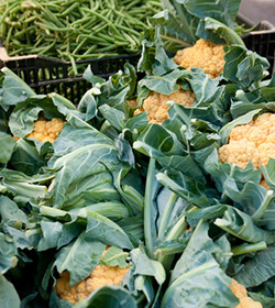 Cauliflower Greenmarket