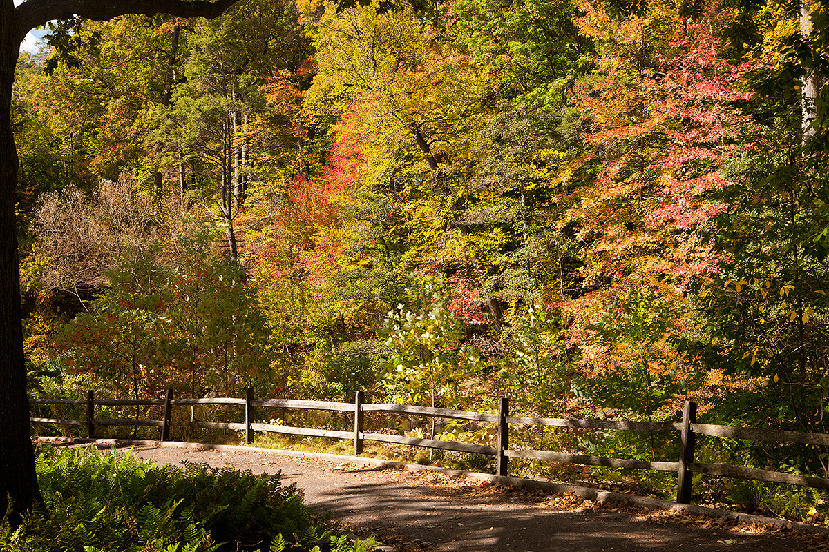 Thain Family Forest NYBG fall foliage