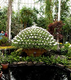 Kiku The Art of the Japanese Garden