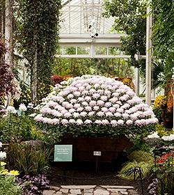 Kiku The Art of the Japanese Garden ozukuri