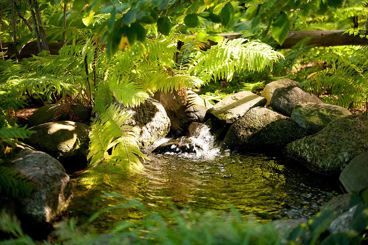 Rock garden NYBG cascade