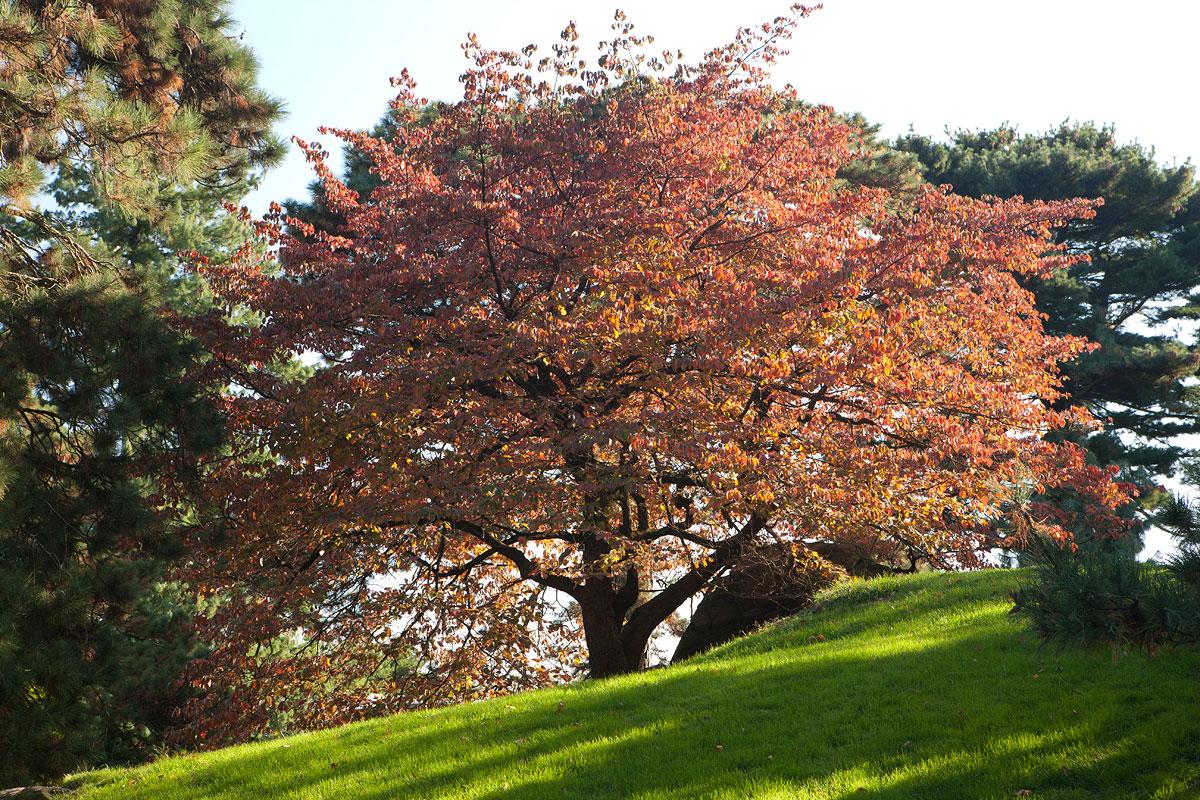 Ross Conifer Arboretum
