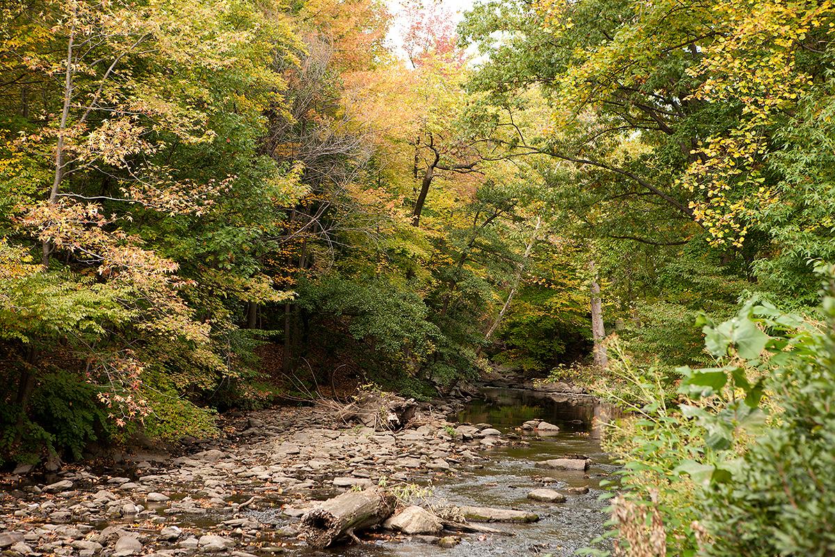 Thain Family Forest Bronx River Autumn