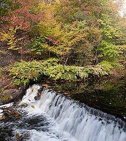 Thain Family Forest Bronx River