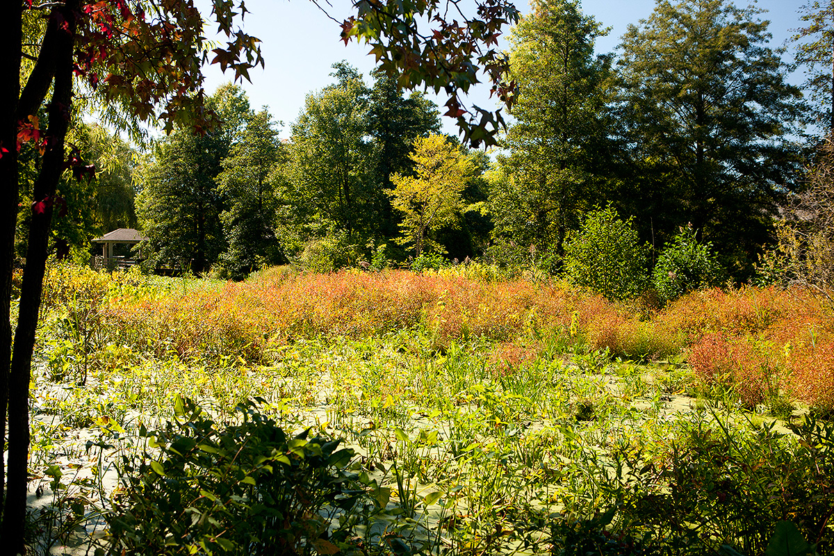 IMAGE(https://www.nybg.org/blogs/plant-talk/wp-content/uploads/2014/10/1014-wetland-trail-1200x800.jpg)