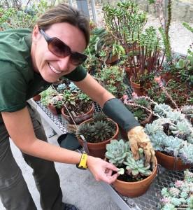 Nolen Greenhouses gardener Karen Drews takes leaf cuttings