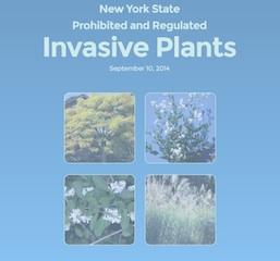 NYS Invasives