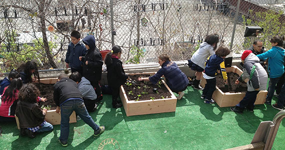 PS 207 community garden Bronx Green Up