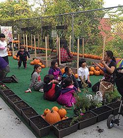 Bronx Green Up PS 207 community garden