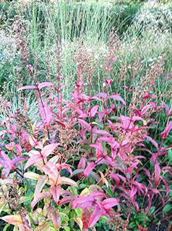 Shades of Autumn - Plant Talk