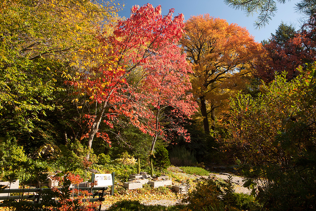 fall foliage Archives - Plant Talk