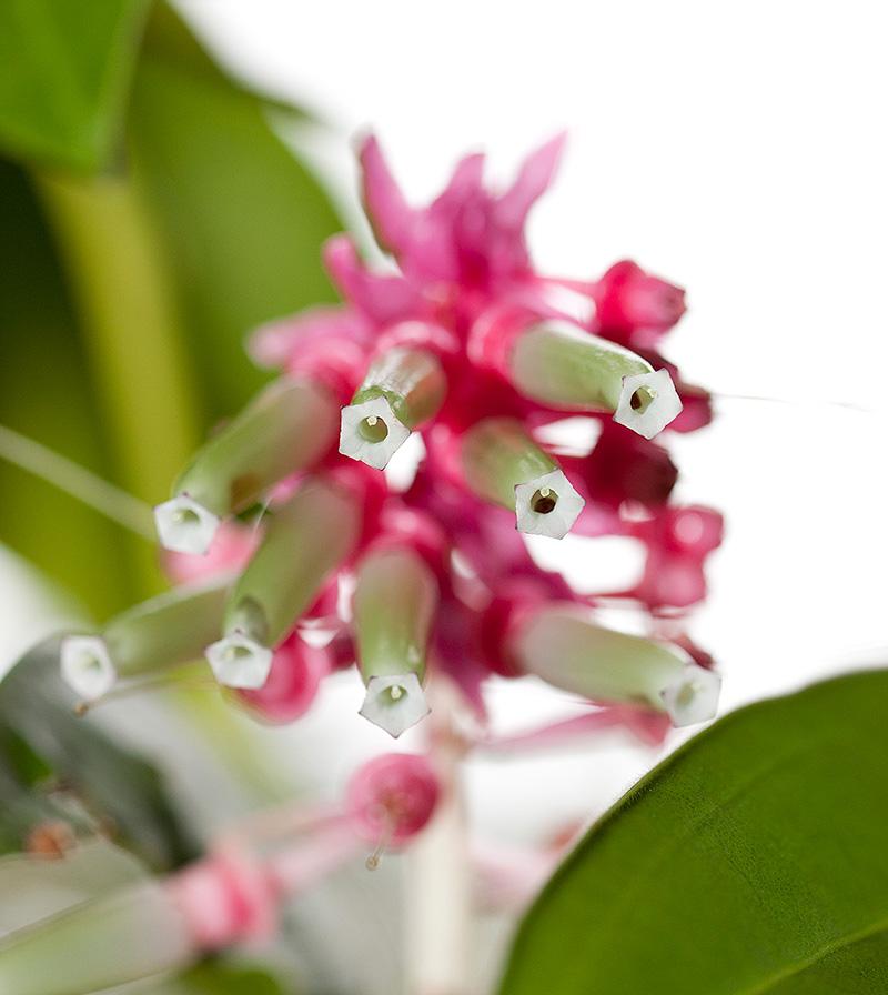 Wild Medicine in the Tropics
