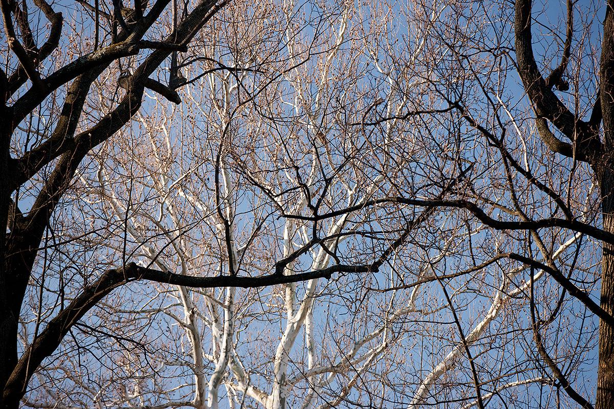 0115-trees-1200x800