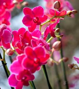 wild medicine photo contst haupt conservatory orchids