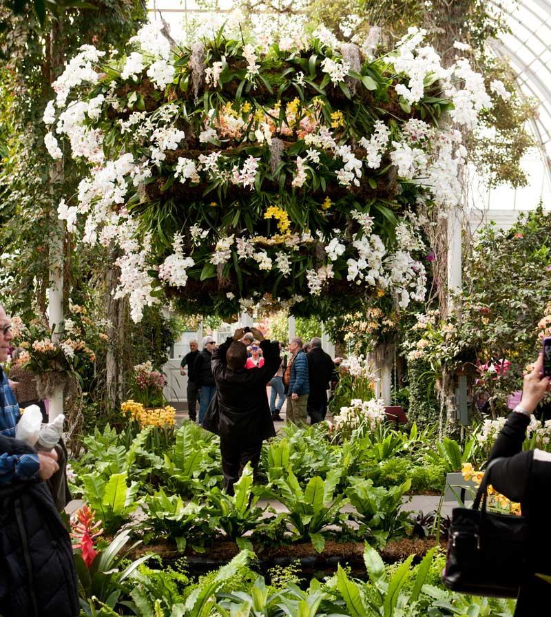This weekend escape with orchid evenings plant talk the orchid show chandeliers mozeypictures Gallery