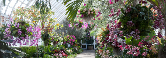 This weekend escape with orchid evenings plant talk the orchid show chandeliers nybg enid haupt conservatory mozeypictures Gallery