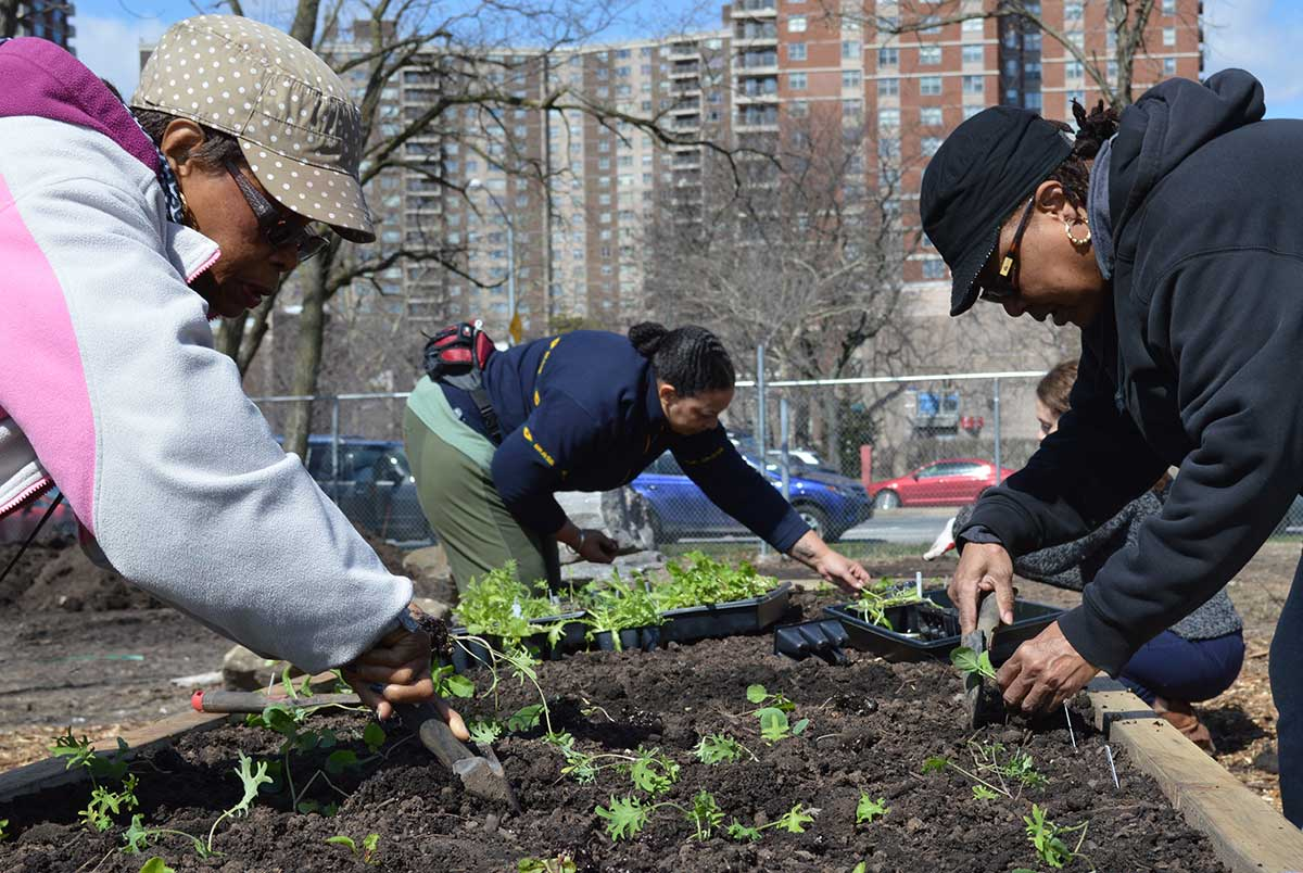 Planting those indoor-started seedlings at Rivers Run Community Garden, Bronx. Photo by Sara Katz