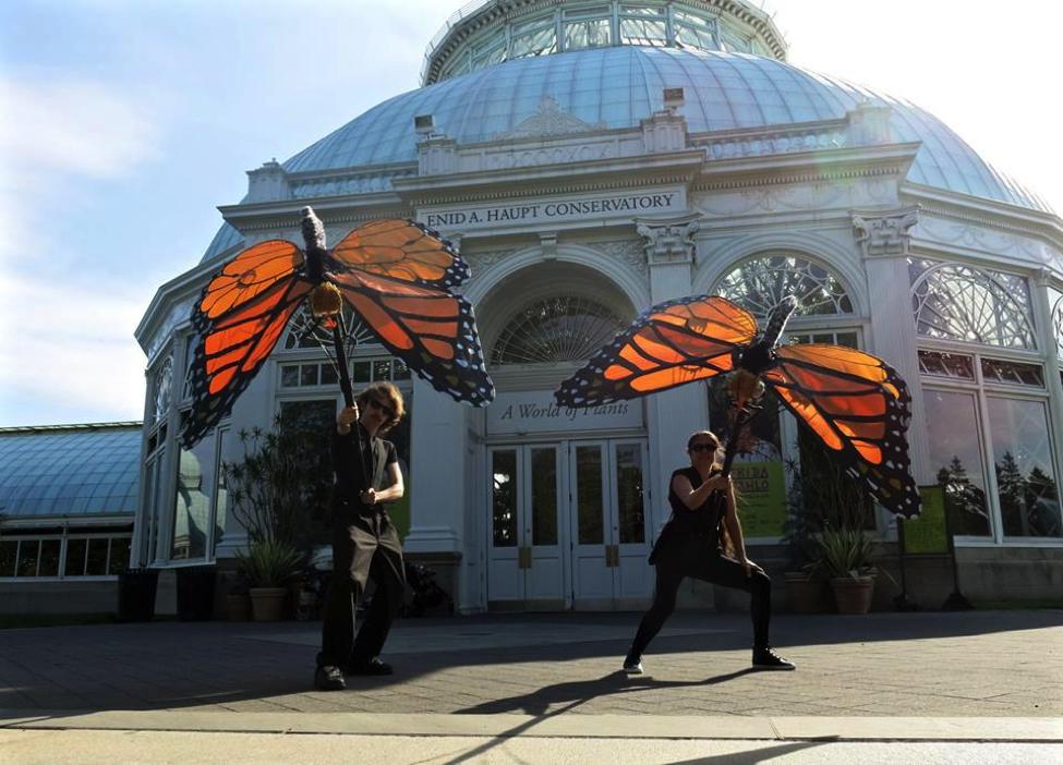 Monarch butterflies in action! (Photo Credit: Patricio Huerta)
