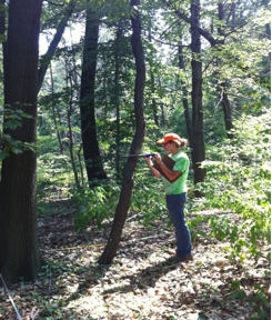 Forest intern collecting inventory data
