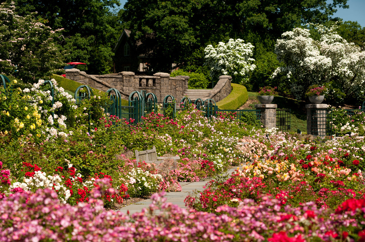 Rose Garden Weekend: A Classic Spring Spectacle - Plant Talk