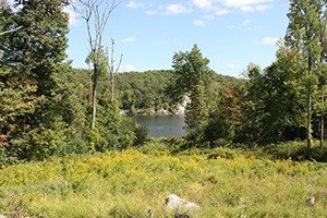 Black Rock Forest Consortium is home to many native plant colonies.