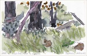 Landscape architect Nancy Aten captured the landscape in Black Rock Forest in her watercolor art.