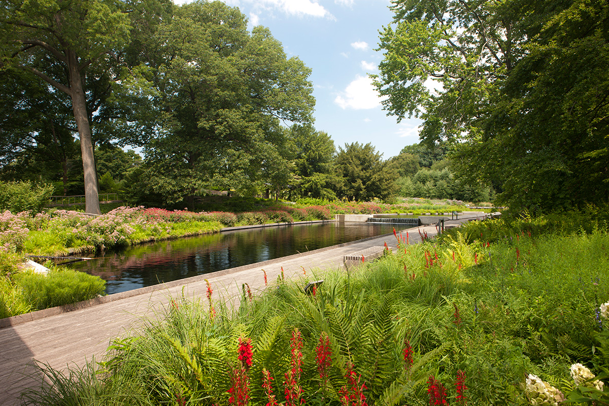 Native Plant Garden water feature