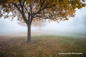 Valerie-Jardin-photography