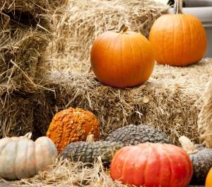 Pumpkins at NYBG