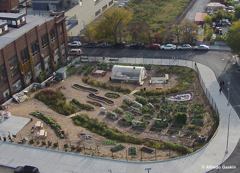 New Roots Community Garden in the Bronx