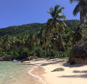 Cocos nucifera dotting the Dominican coast