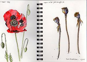 Poppies by Beth Breakstone