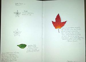 My Jade Plant Study and Autumn Leaf