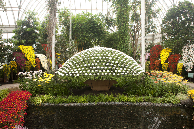 Chrysanthemum Archives - Plant Talk