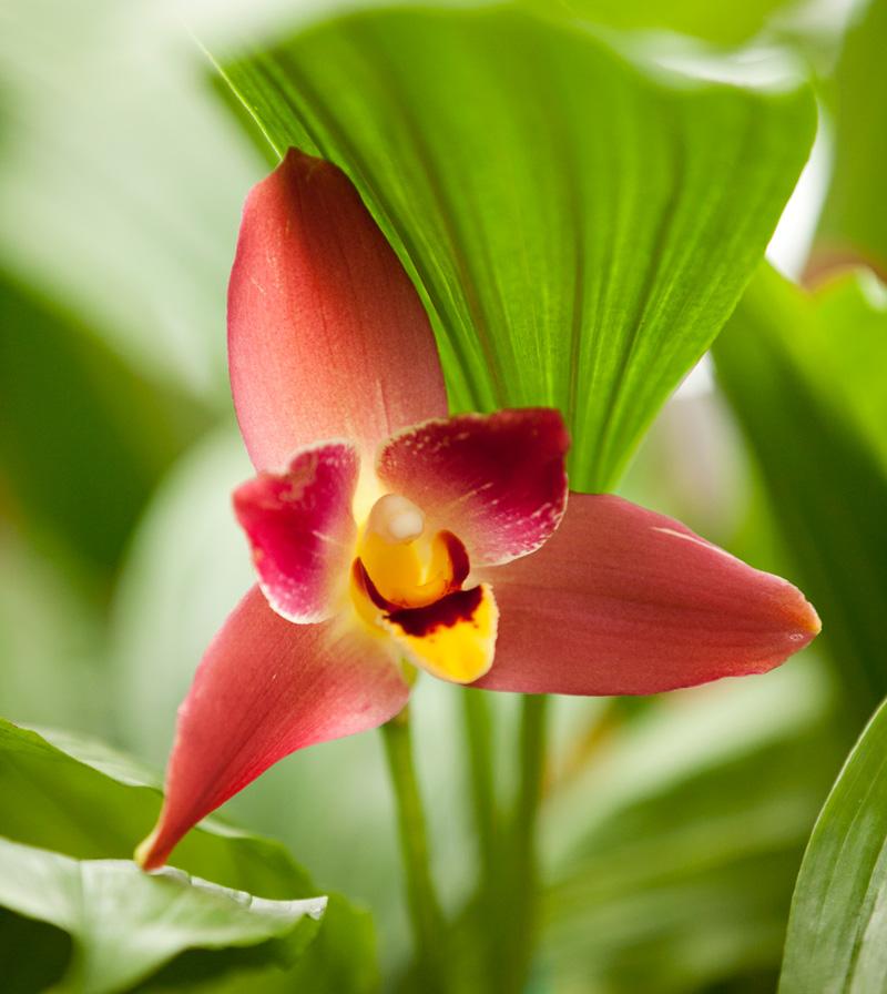The Orchid Show Orchidelirium