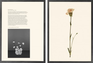 Bird's-eye view, Bratislava Declaration, Bratislava, Slovakia, August 3, 1968; Dianthus caryophyllus, Carnation, Colombia, Paperwork and the Will of Capital, 2015 © Taryn Simon. Courtesy Gagosian Gallery. Photography by Stuart Burford Photography