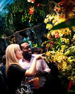 Orchid Evenings at NYBG