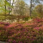 Azalea Garden New York Botanical Garden
